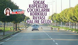 SOKAK KÖPEKLERİ ÇOCUKLARIN KORKULU...
